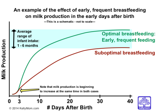 The Effect of Optimal Breastfeeding on Milk Production